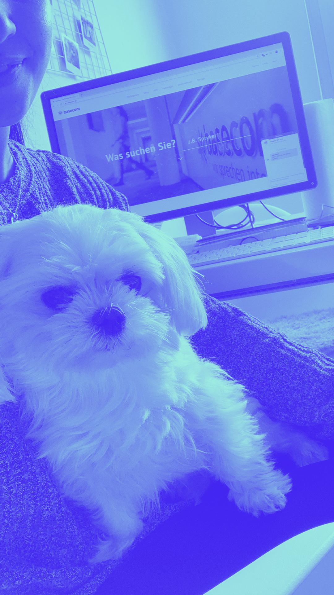 Homeoffice Hund